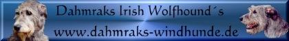 Seriöse Hobbyzucht seit 1997 von Irish Wolfhounds den sanften Riesen in Oberfranken. Wir laden Sie gerne suf einen Besuch ein um uns und unsere Hunde kenne zu lernen. Besuchen Sie auch unsere HP.
